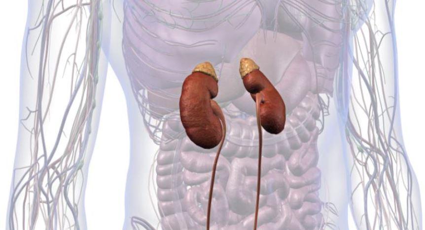 Prevenzione della patologia renale